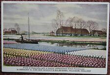 1930's Field of Hyacinths Bulb Farm Hillegom Advertising Postcard Netherlands