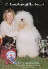 OLD ENGLISH SHEEPDOG BREED KENNEL ADVERT PRINT PAGE LAMEDAZOTTEL DOG WORLD 1993