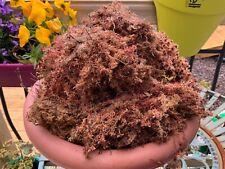 1.5 kg Freshly Harvested Red Peat Sphagnum Moss Garden Hanging Baskets
