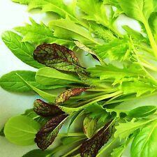 MESCLUN - ORIENTAL SALAD LEAF MIX - 400 Seeds [..a distinct blend of varieties]