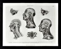 1874 Bilder Anatomical Print - Head Neck Brain Nerves Eye Muscle Human Anatomy