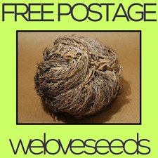 LOCAL AUSSIE STOCK - Rose Of Jericho, Anastatica Flower Seeds ~10x FREE SHIPPING