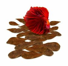 SunGrow Catappa Indian Almond Leaves, Best Way to Create Tropical Rainforest .