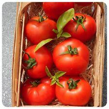Arkansas Traveller rote Heirloom Tomate ertragreich ideal für Selbstversorger