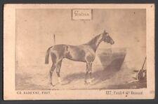 Hippisme. Cheval de course - Gontran. Photographe Barenne. Vers 1870. CDV