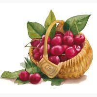 Watercolor Illustration of Cherries, berries