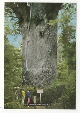 Giant Kauri Tree New Zealand Postcard 157c