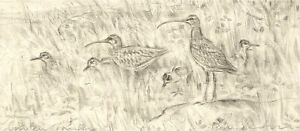 Peter Partington (b.1941) - Contemporary Etching, Curlew Family