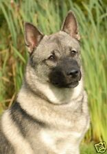 """Elkhound Dog A6 (approx 4"""" x 6"""") Blank Card / Notelet Design No 4 By Starprint"""