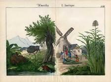 Amerika-Zuckerrohr-Mühle-Bison-Biber Lithographie 1840 Büffel-America