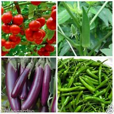Vegetable Seeds Combo  ,tomato ,Ladies Finger ,Brinjal ,Chilli  15 seeds each