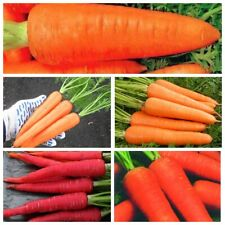 Seeds Carrot Coral Orange Winter Red Giant Trophy Shantane Royal Vegetable