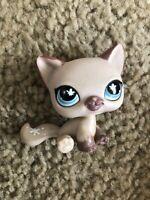 Littlest Pet Shop Lavender CAT #664 Blue Butterfly Eyes Purple Mauve Kitty
