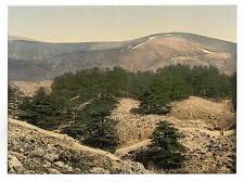 Vue générale des cèdres du Liban A4 papier photo
