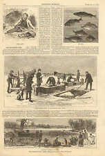 Rochester, NY. Transplanting Fish, Stocking Barren Waters, 1873 Antique Print