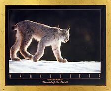 Canada Lynx Tom Brakefield Snow Wild Animal Wall Art Decor Golden Framed Picture
