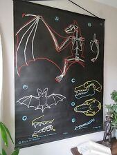 VINTAGE DR AUZOUX P SOUGY PULL DOWN SCHOOL WALL CHALK CHART OF A BAT ZOOLOGY