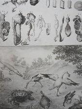 Guillaume Jacques de FAVANNE FILIUS GRAVURE ORIGINALE ZOOMORPHOSE XVIIIéme