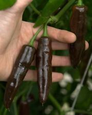 Rare Chocolate Fatalii Pepper, 25 Seeds From Organically Grown NON GMO Plants