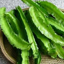 20pcs vegetable Seeds winged bean (Psophocarpus tetragonolobus)