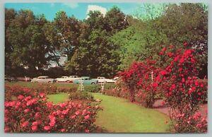 Memphis Tennessee~Overton Park Rose Gardens in Full Bloom~Vintage Postcard
