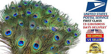 Peacock Feathers Craft DIY Craft Wedding Decoration  Steam cleaned  50 pc