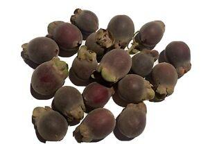 Rhodomyrtus tomentosa - Ceylon Hill Gooseberry - Delicious Fruit Seeds