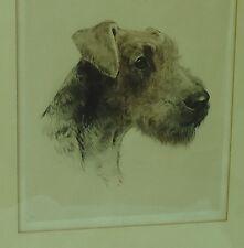 "Airedale Irish Lakeland Welsh Terrier Etching Eberhardt Germany 10X11"" Dog"