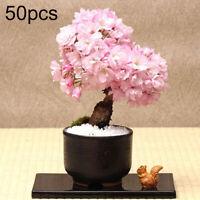 CO/_ 20//50Pcs Rare Light Blue Rose Flower Seeds Garden Fragrant Bonsai Plant HK