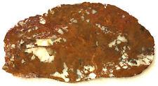 Gold Jasper Slab - White Quartz - 180 Grams