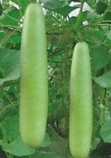 Cucuzzi Vegetable Edible Gourd (Dwarf) 25 Seeds