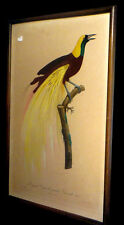 [ORNITHOLOGIE OISEAUX] BARRABAND - Le Grand oiseau de paradis émeraude n°1.