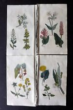 John Hill 1812 Lot of 4 Hand Col Botanical Prints. Herbal Book Plates