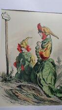 Illustration de Grandville - Fleurs Animées - Capucine -