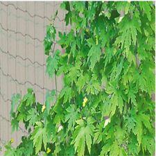Garden Use Mesh 1.8X3.6m Plant Support Climbing Netting Green Nylon Fence
