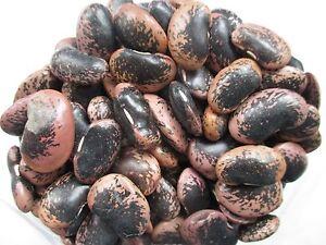 Bohnen Käferbohnen rot schwarz violett getrocknet Europa 500 g Beutel