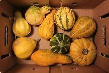 Zucche ornamentali biologiche di vari tipi e dimensioni (no semi!)