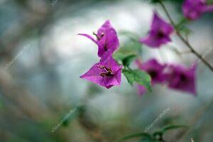 Purple dream flowers spring DIGITAL ART PHOTO PICTURE JPEG BACKGROUND