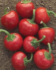 Pepper Seeds 100 Large Red Hot Cherry Pepper 70 Days