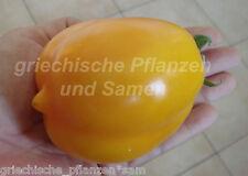 RUSSISCHE LIME Zitronen Tomate 10 Samen alte Sorte SEHR SELTEN Tomaten samenfest