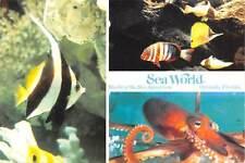 USA World of the Sea World Aquarium Fishes Octopus Orlando, Florida Park