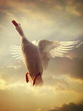 BIANCO DUCK FLYING cieli PHOTO art print poster foto bmp1122a