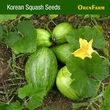 Korean Summer Squash Seed (70 seeds), Vegetable Seed 풋호박, 호박