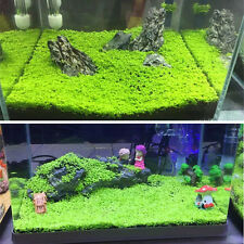 Green Fish Tank Aquarium Seed Aquatic Water Grass Decor Garden Foreground Plants