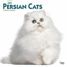 Calendario Persiano 2020.Persiane Cats In Vendita Casa Arredamento E Bricolage Ebay
