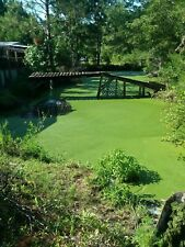 2.5 pounds! DUCKWEED's best deal! Large Quantity! Fresh Cultured Organic