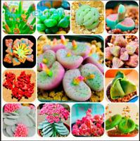 100 Bag Mix Succulent Seeds Lotus Lithops Pseudotruncatella Trees Bonsai Plants