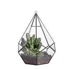 Plant Terrarium Modern Hanging Geometric Diamond Teardrops Shape Clear Glass