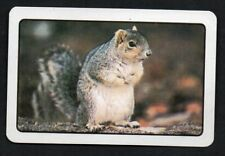 One Single Vintage Playing Swap Card :   SQUIRREL WHITE BORDER