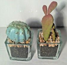 NWT! 2 Mini Barrel Prickly Pear Glass Pots Cactus Retro Desert Garden Home Decor